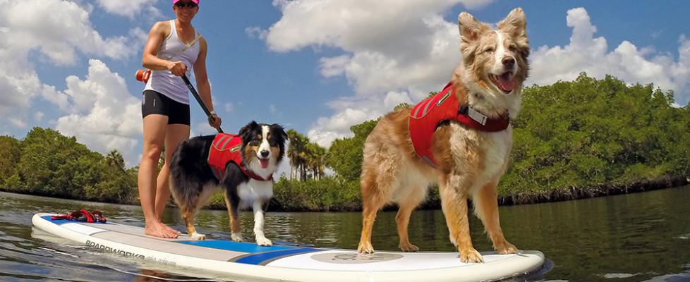 Board Review — Boardworks Joy Ride