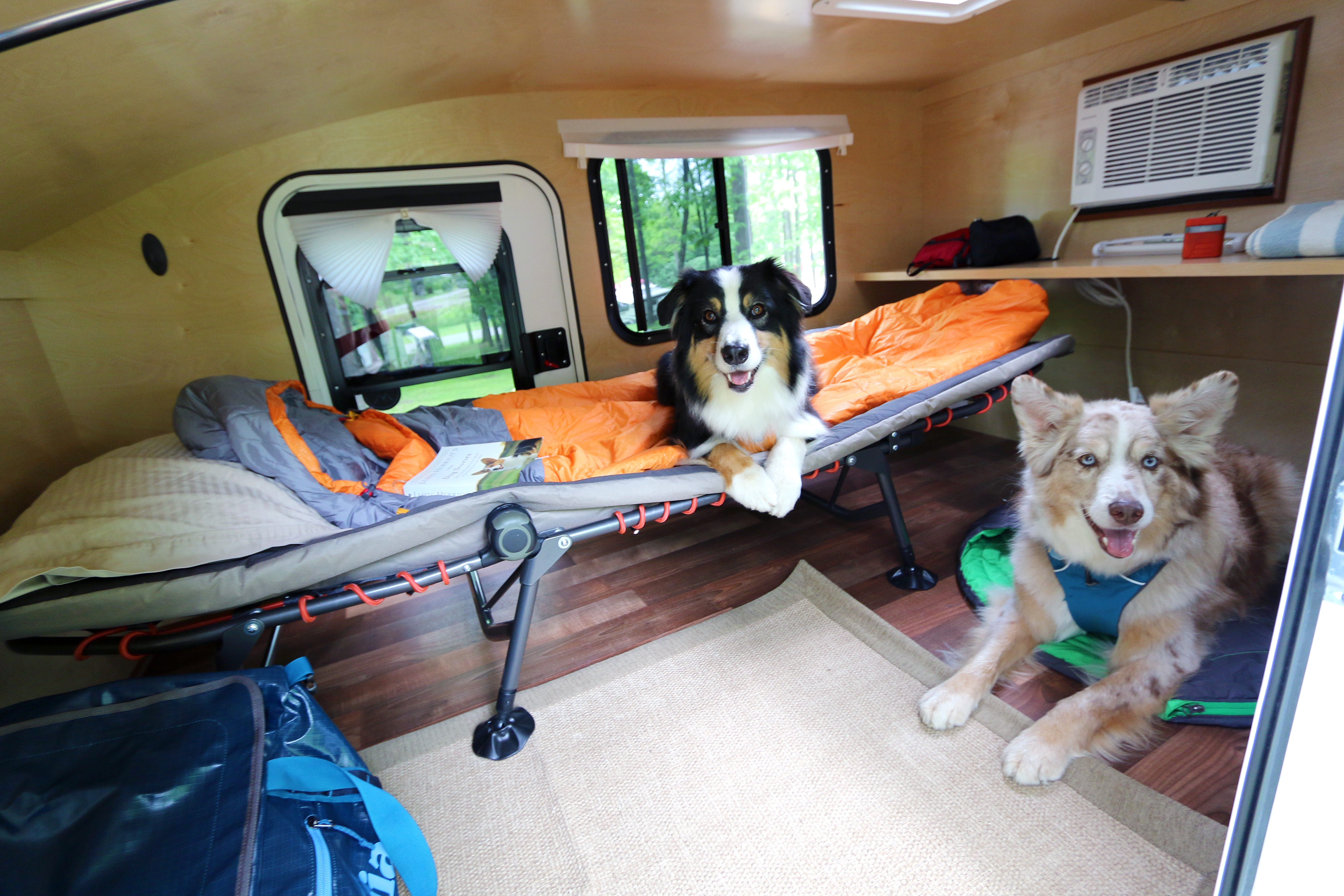 Traveling With Dogs