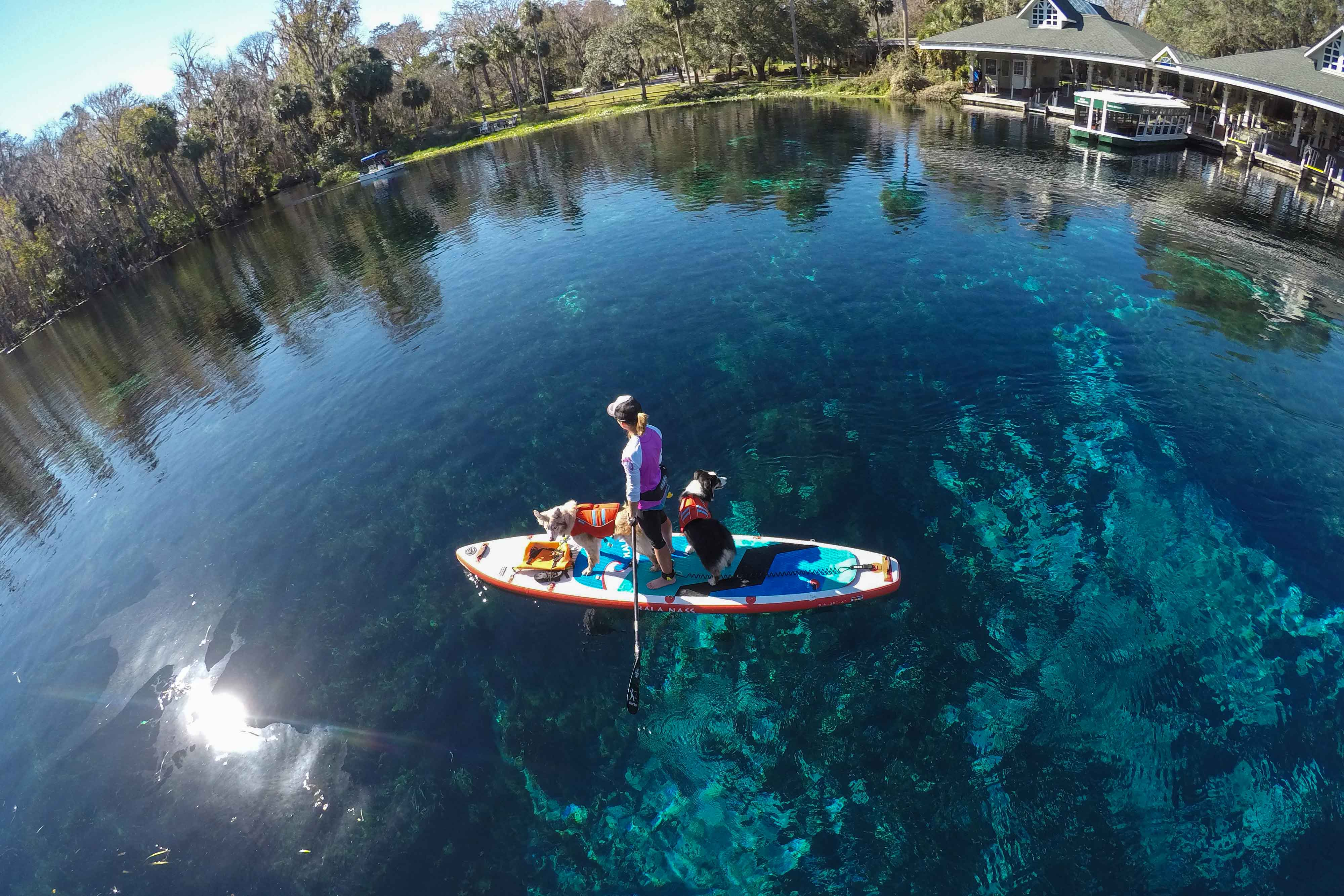 I believe if everyone adventured with their dogs shelters would be empty! As an ACA-certified stand up paddleboard instructor, author and certified canine trainer, I'm here to help people get outside with their dogs. Need advice on training or boards? Want to order some wholesale books, or interview me for a story? I'm always available for a chat, just send me a note!