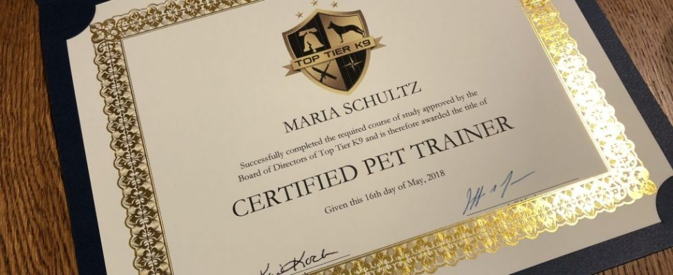 Hey Guys, I'm a Certified Dog Trainer!